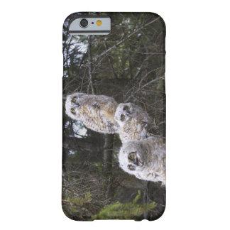 Tres grandes polluelos del búho de cuernos (bubón funda de iPhone 6 barely there