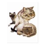 Tres grises y gatos de oro del mascota de Brown Postal