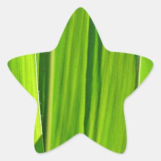 Tres hojas verdes de mayo pegatina en forma de estrella
