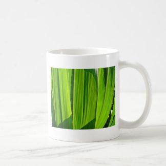 Tres hojas verdes de mayo taza de café