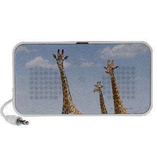 tres jirafas del Masai, camelopardalis del Giraffa Mini Altavoz