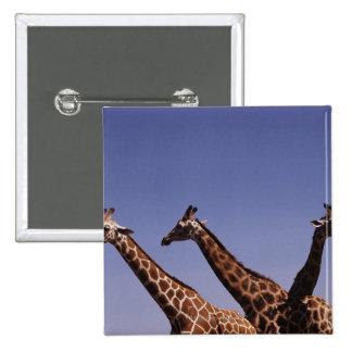 Tres jirafas pin cuadrado
