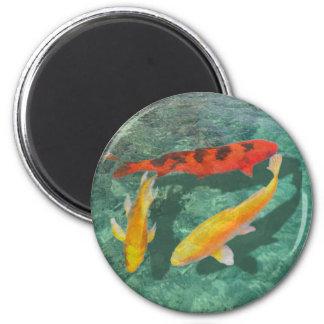 Tres Koi mezclado en una piscina Imán Redondo 5 Cm