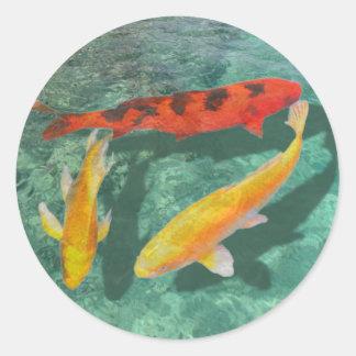 Tres Koi mezclado en una piscina Pegatina Redonda
