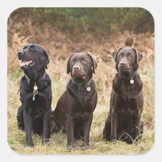 Tres labradores retrieveres negros pegatinas cuadradases