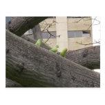 Tres loros en un árbol postales