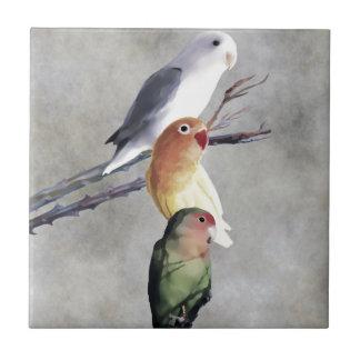 Tres Lovebirds bonitos Azulejo Cuadrado Pequeño