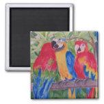 Tres Macaws de Maui Iman