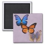 Tres mariposas bonitas imán para frigorifico