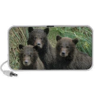 Tres oso grizzly Cubs o Coys (Cub del Altavoz