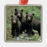 Tres oso grizzly Cubs o Coys (Cub del Adorno Cuadrado Plateado
