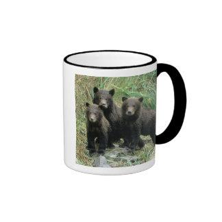 Tres oso grizzly Cubs o Coys (Cub del Tazas De Café