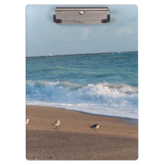 tres pájaros en la playa de la Florida de la foto