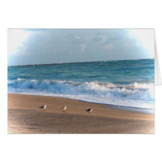 tres pájaros en la playa de la Florida de la foto Felicitacion