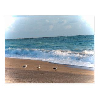 tres pájaros en la playa de la Florida de la foto Tarjetas Postales