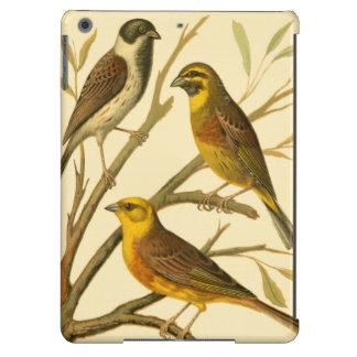 Tres pájaros nacionales encaramados en una rama