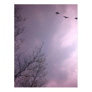 Tres pájaros vuelan tan arriba tarjeta postal