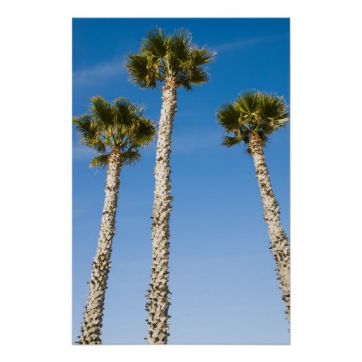 Tres palmas poster