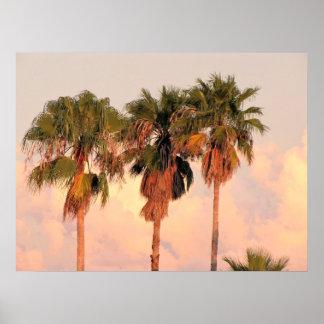 Tres palmeras bañadas en puesta del sol caliente posters