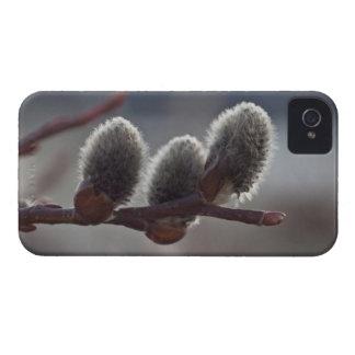 Tres pequeños Catkins Case-Mate iPhone 4 Funda