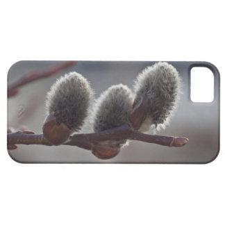 Tres pequeños Catkins iPhone 5 Carcasas