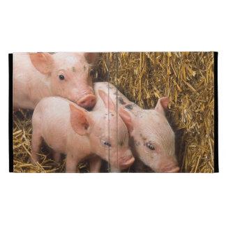 Tres pequeños cerdos