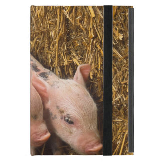 Tres pequeños cerdos iPad mini cárcasas