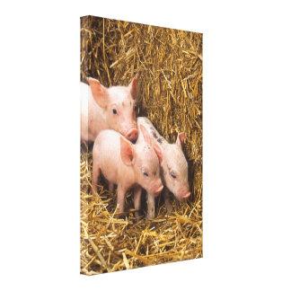 Tres pequeños cerdos impresión en lienzo estirada