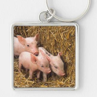 Tres pequeños cerdos llavero cuadrado plateado