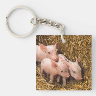 Tres pequeños cerdos llavero cuadrado acrílico a una cara