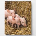 Tres pequeños cerdos placas de madera