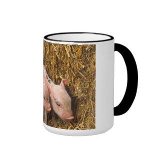 Tres pequeños cerdos taza
