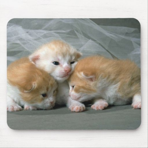 Tres pequeños gatitos tapete de raton