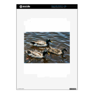 Tres pequeños patos iPad 2 skin