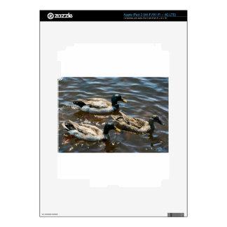 Tres pequeños patos iPad 3 skins