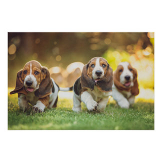 Tres perritos de Basset Hound alegre que corren Póster