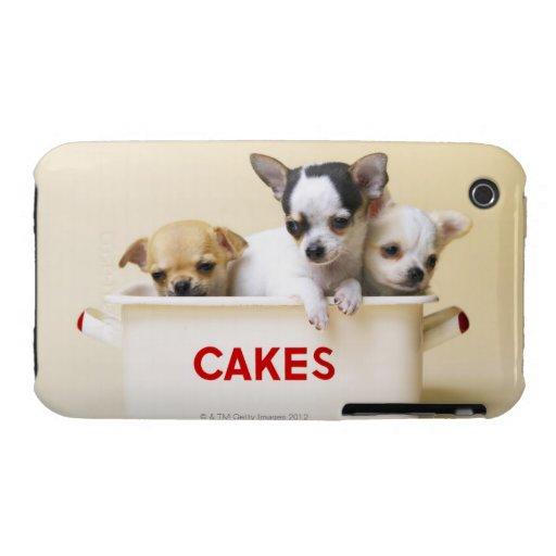 Tres perritos de la chihuahua en lata de la torta iPhone 3 carcasas