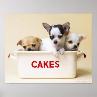 Tres perritos de la chihuahua en lata de la torta póster