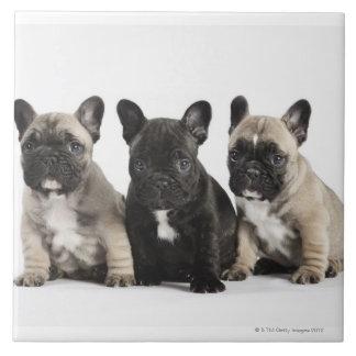 Tres perritos pedigríes azulejos