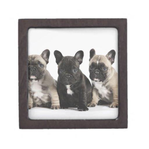 Tres perritos pedigríes cajas de joyas de calidad