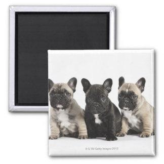 Tres perritos pedigríes iman para frigorífico