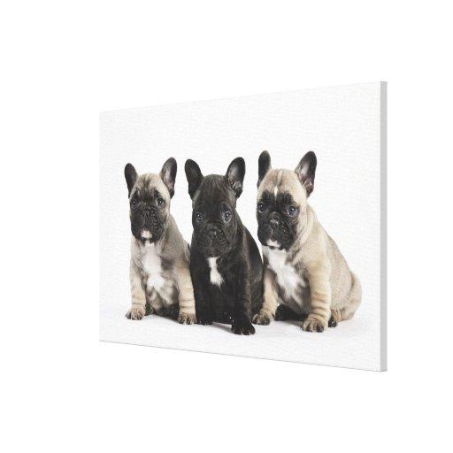 Tres perritos pedigríes impresión en lona