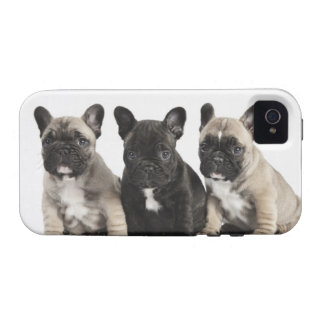 Tres perritos pedigríes iPhone 4 fundas