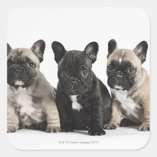 Tres perritos pedigríes colcomanias cuadradass