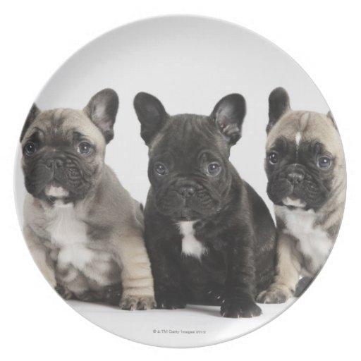 Tres perritos pedigríes plato de comida