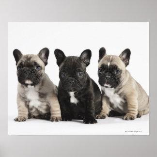 Tres perritos pedigríes póster