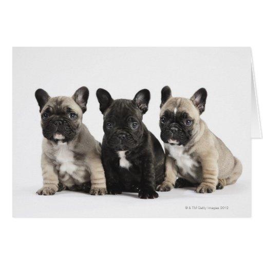 Tres perritos pedigríes tarjeton