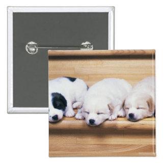 Tres perritos pin cuadrado