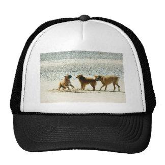 Tres perros de Brown que juegan en la playa solead Gorras De Camionero