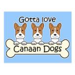 Tres perros de Canaan Postal
